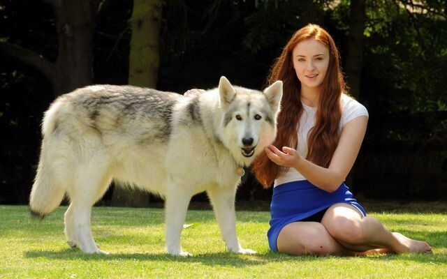 Archivo:Sophie-Turner-With-a-White-Wolf-Game-of-Thrones-Wallpaper.jpg
