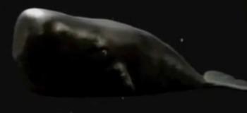Magrathean whale-tv