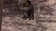 Monkey Burgdorf and Krebs kissing