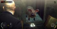 The Runaway Piggy