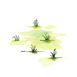 File:SwampB5 (2).jpg