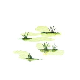 File:Swamp4 (2).jpg