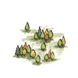 File:Forest6 (2).jpg