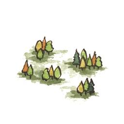 File:Forest5 (2).jpg