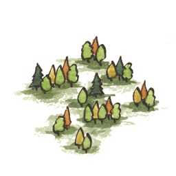 File:Forest7 (2).jpg