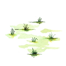 File:SwampB6 (2).jpg
