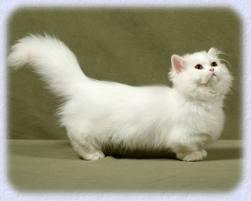 File:Cat8NTC.jpeg