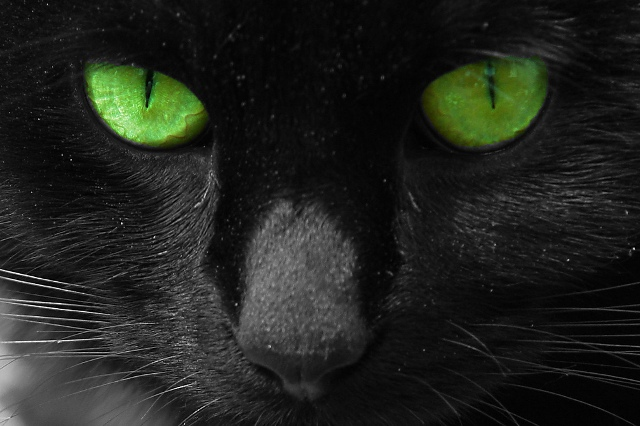 File:Cat-picture-green-eyes.jpg