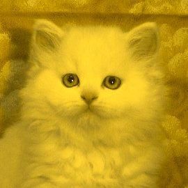 File:Lemonkit.jpg