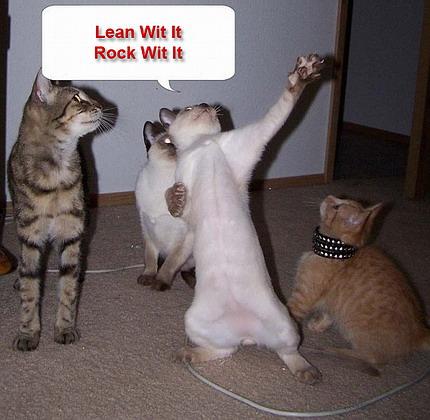 File:Funny-dancing-cats.jpg