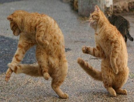 File:Cats dancing-12755.jpg