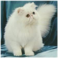 File:Cat1NTC.jpg