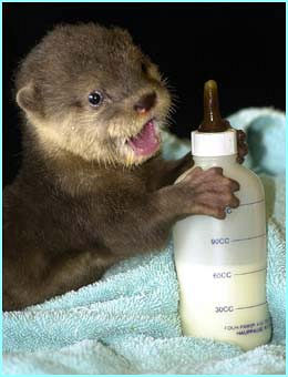 File:Baby-otter-cute.jpg