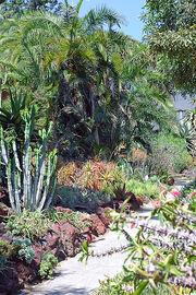 Huntington Garden - the desert garden