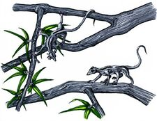 Wood-rat