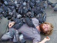 Pigeonsattack