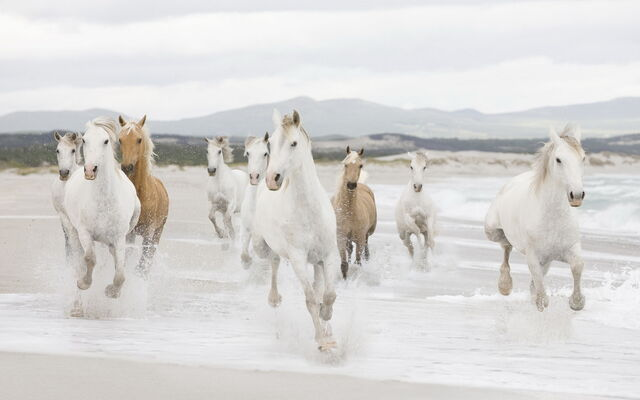 File:Horses on beach-wide.jpg