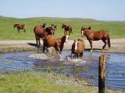 Yosemite Horses