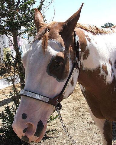 File:Paint Horse.jpg