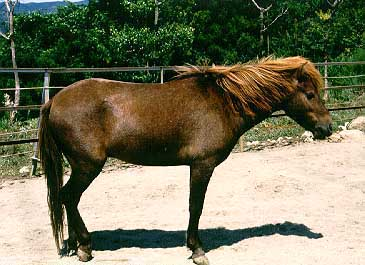 File:Noma-Pony-Horse.jpg