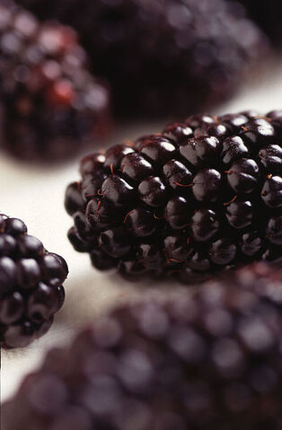 File:393px-Black Butte blackberry.jpg