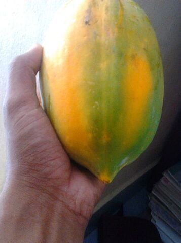 File:Ripen Papaya from the same tree (image on the left). Cropped for better representation.jpg