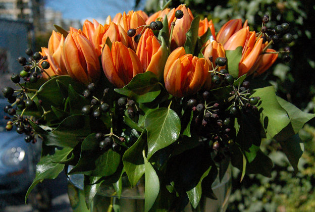 File:Tulips-and-seeded-ivy.png