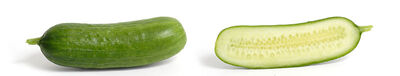 Cucumber and cross section