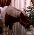 Teitur hesten til roy (hotel cæsar).png
