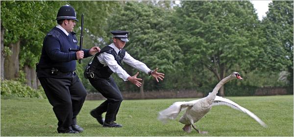 File:The swan.jpg