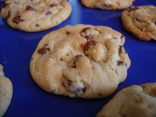 File:Cookie, Anyone.jpg