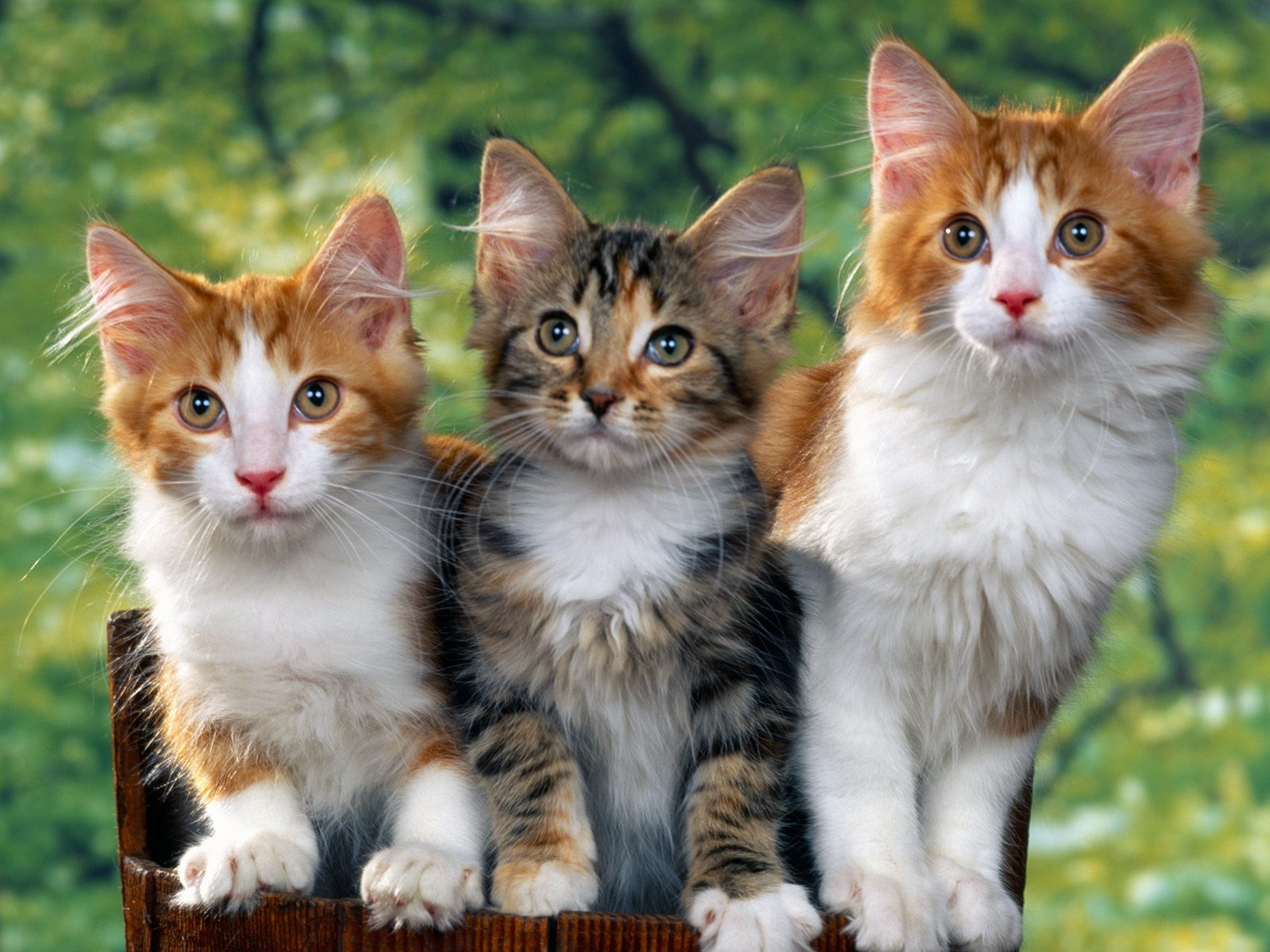 Cats Pictures