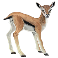 File:Compagnon-gazelle.png