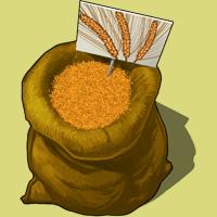 Graines-orge