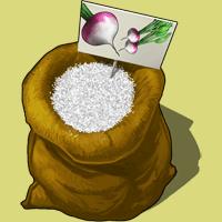 Graines-navet