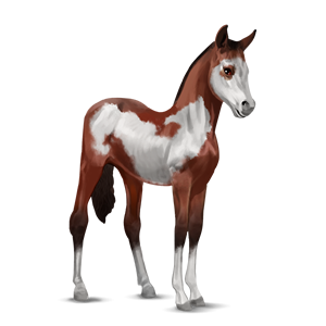 File:Paint Horse Foal - Cherry Bay Overo.png