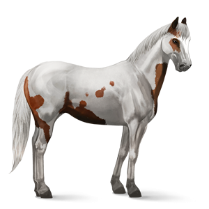 File:Paint Horse - Chestnut Tovero.png