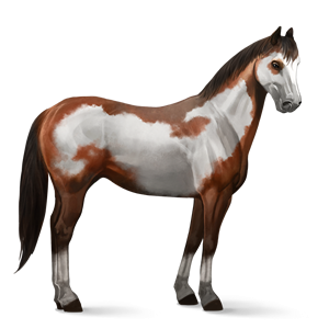 File:Paint Horse - Cherry Bay Overo.png