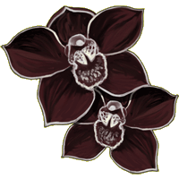 File:Orchidee-noire.png