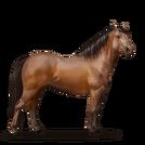 Quarter Pony Brauner