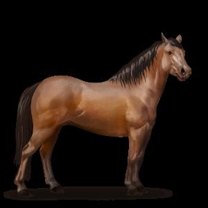 Quarter Pony Brauner.png