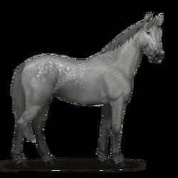 Selle Français Pferd Apfelschimmel.png