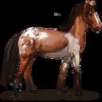 Abaco-Wildpferd