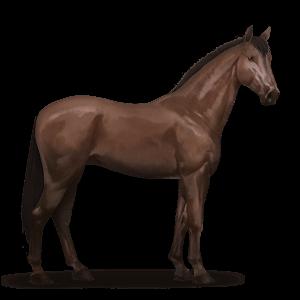 Don-Pferd.Dunkelfuchs.png