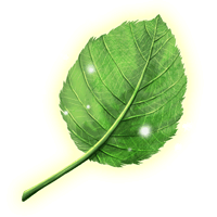 Datei:Feuilles-sylves.png