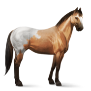 Appaloosa Schabracken-Falbe Altes Design