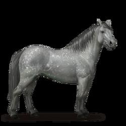 Connemara-Pony Apfelschimmel.png