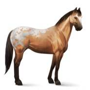 Appaloosa Falb-Schecke Altes Design