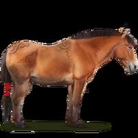 Nangchen-Pferd