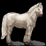 Quarter Horse.Cremello.Altes Design